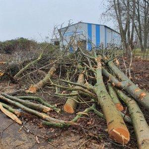 Baumfällarbeiten für Grundstückserschließung